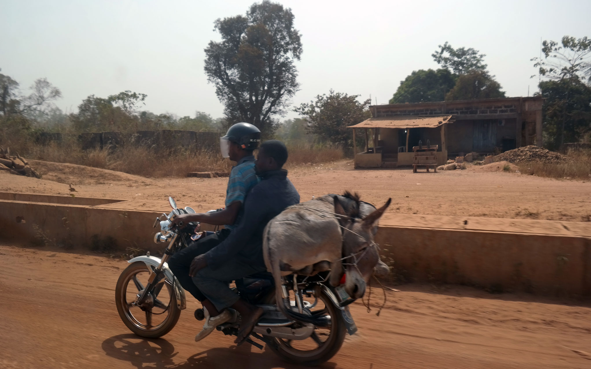 Donkey on motorbike